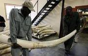 Elephant Ivory Tusks was formed to further promote the public awarenes