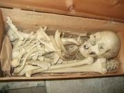 ALL Real Human Individual Bones available at good prices. Contact now!